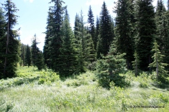 Meadow at Lolo Visitor Center