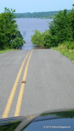 Turtle Crossing Ahead