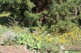 Lower Mesa Falls Trail