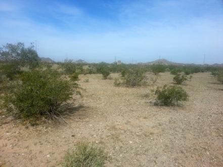 Morning Walk - Buckeye, AZ