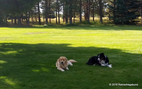 Resting Together - Finley and Jagger