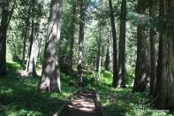 Lush think foliage on the grove walks.