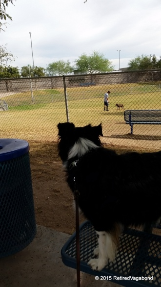 Watching the Dogs Play