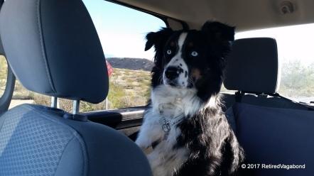 Alert in his truck - The Workhorse