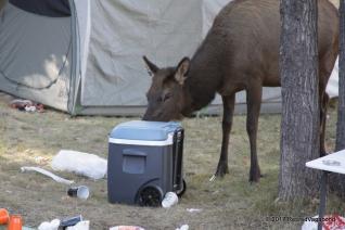 Camp Visitors