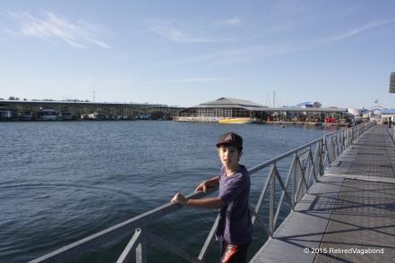 The Marina Lake Pleasant