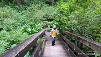 Sydney hiking through the Natual Rain Forest