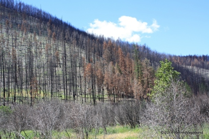 Lolo Pass Forest Fire 2013