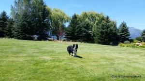 The Play Yard