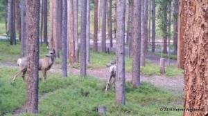 Camp Vistors