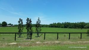 Typical Farm South Carolina along our drive