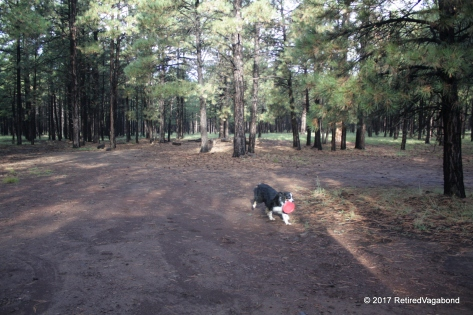 Jagger Loves Playtime in the Forest